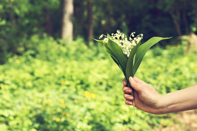 Comment Conserver Du Muguet En Vase l'origine du muguet, l'emblème absolu du 1er mai - bricofamily