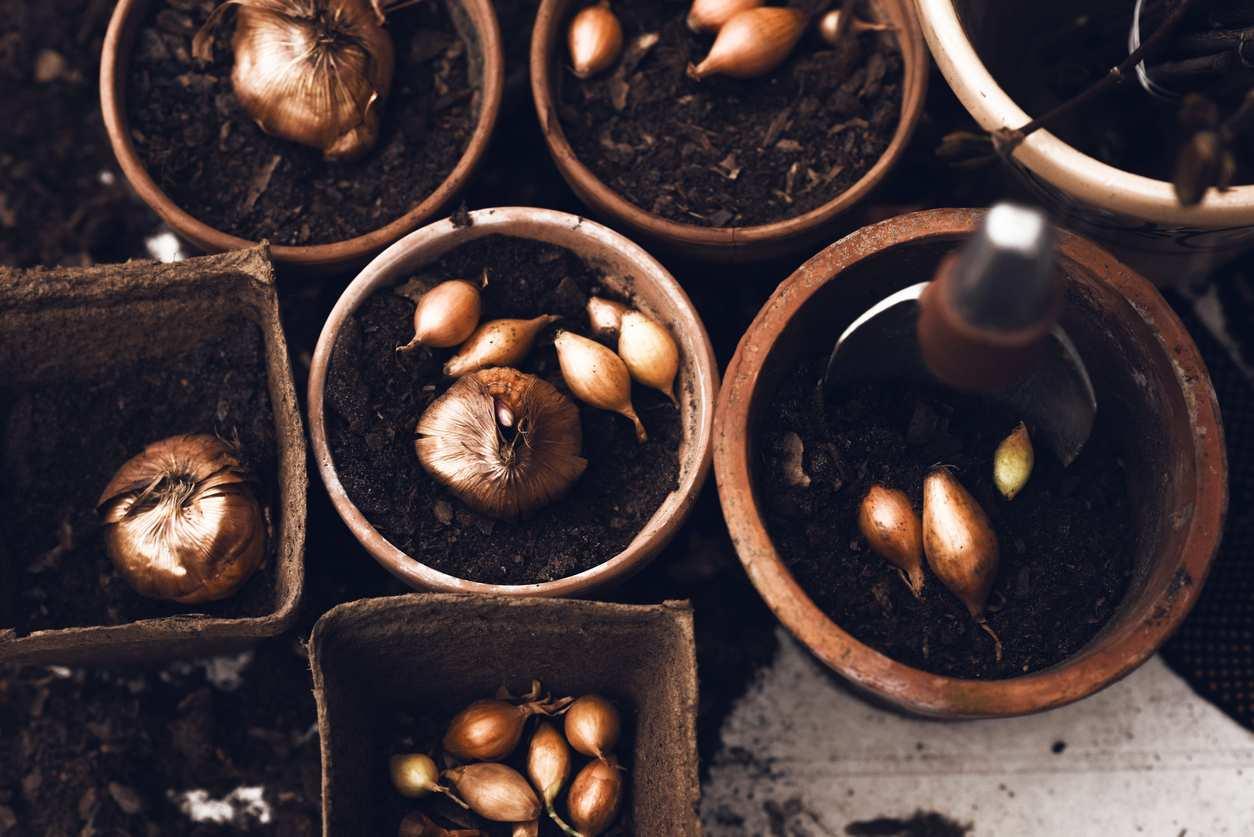 4 astuces pour planter ses bulbes de printemps bricofamily. Black Bedroom Furniture Sets. Home Design Ideas