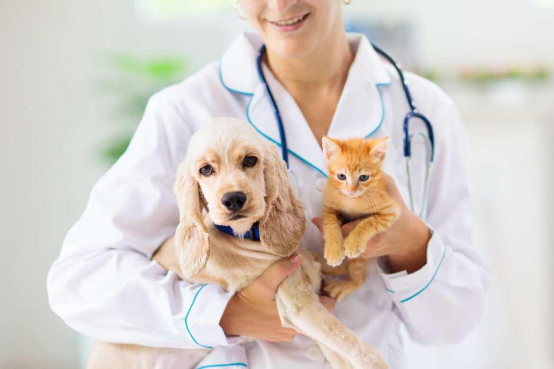 Un chien et chat chez un vétérinaire