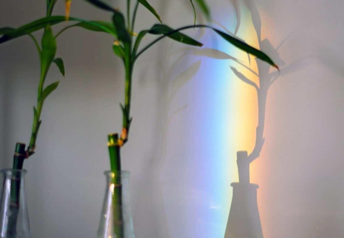 Deux vases transparents contenant des bambous, reflets arc-en-ciel