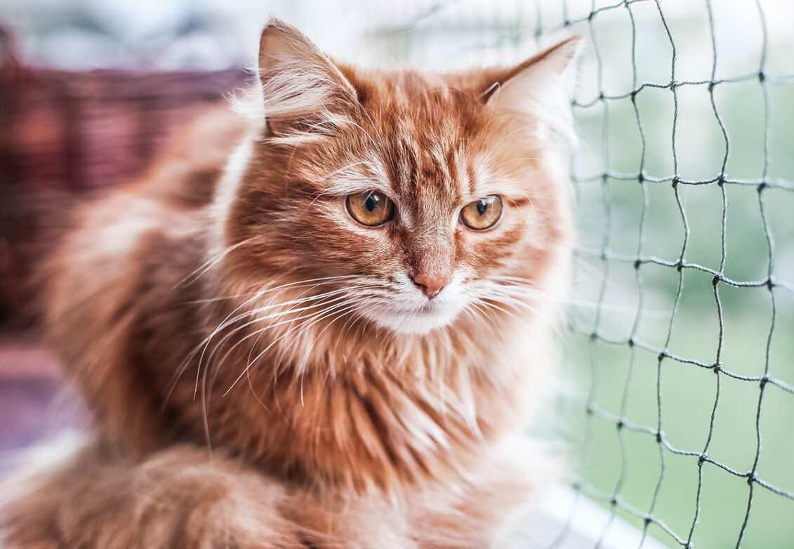 Un chat roux assis sur un balcon sécurisé par un grillage