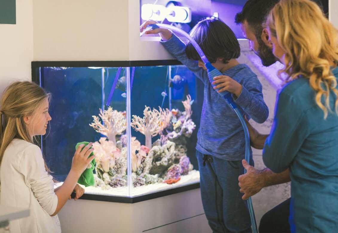 Une famille installe la pompe d'un aquarium