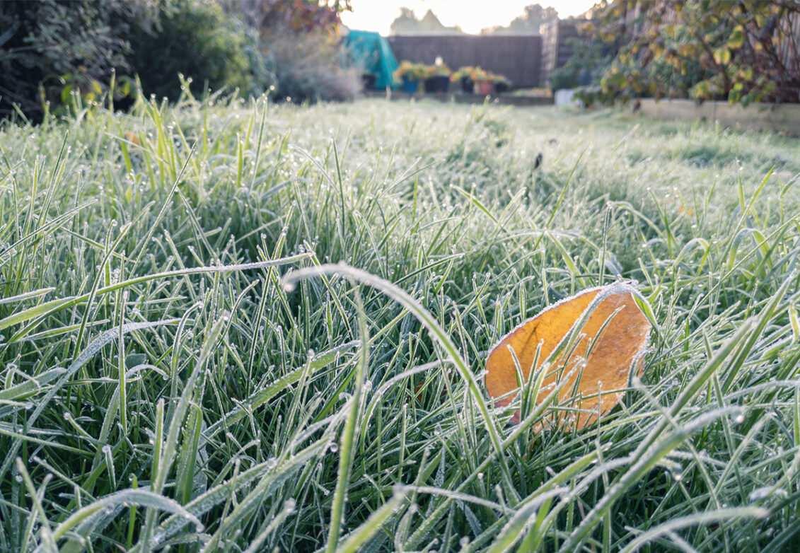 Un jardin givré par la fraicheur du matin