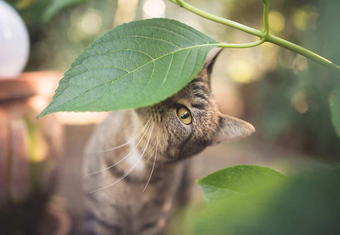 Un chat caché derrière un feuillage