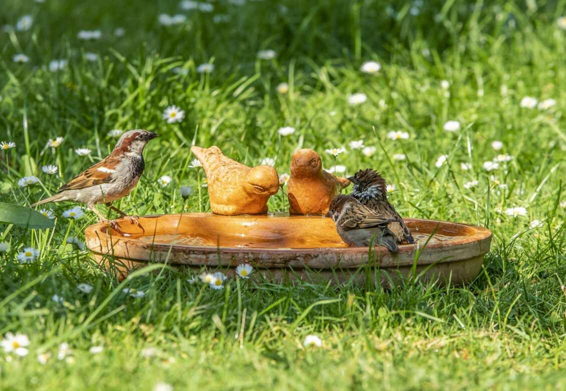 Des oiseaux qui jouent dans un bassin
