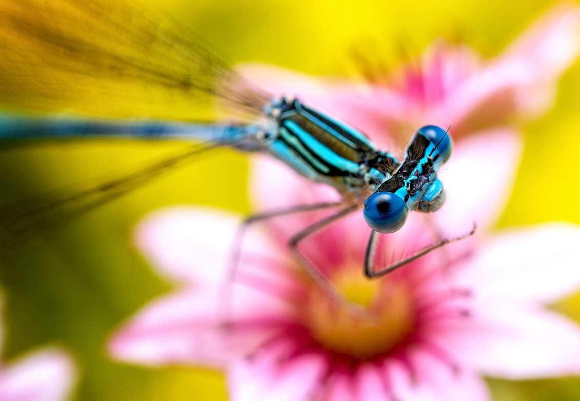 Une libellule sur une fleur