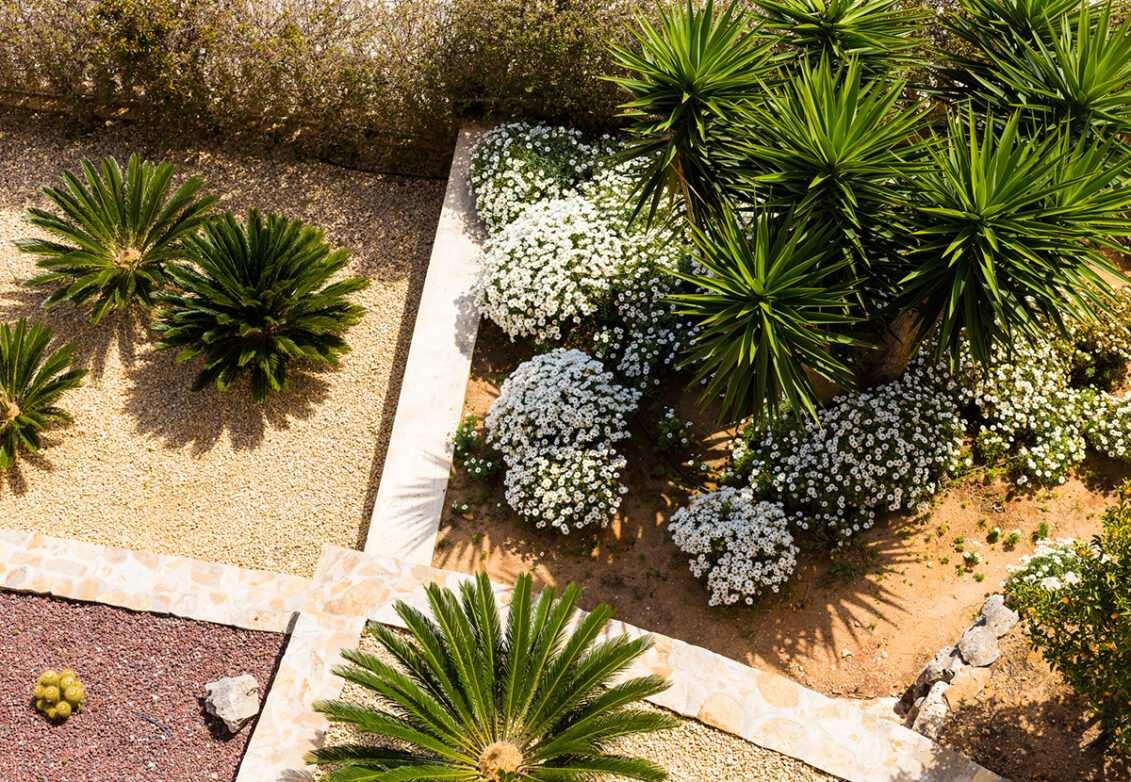 Un jardin exotique avec palmiers et plantes grasses