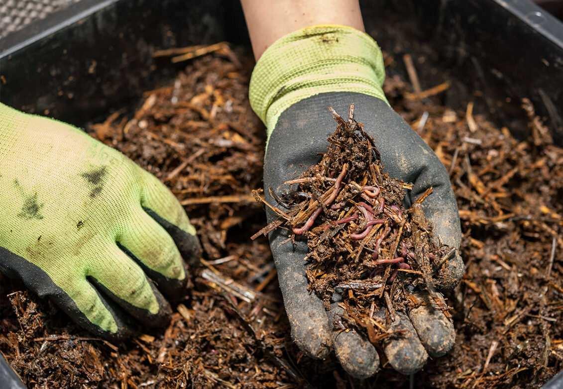 Un jardinier nous montre des vers de terre dans son jardin