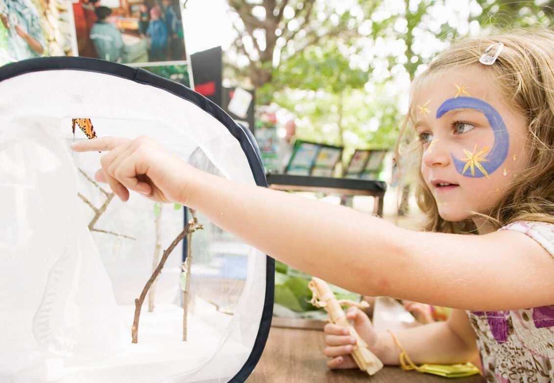 Une petite fille qui observe un papillon d'élevage