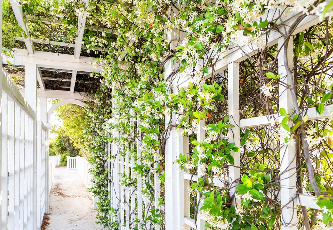 Plantes grimpantes dans un jardin