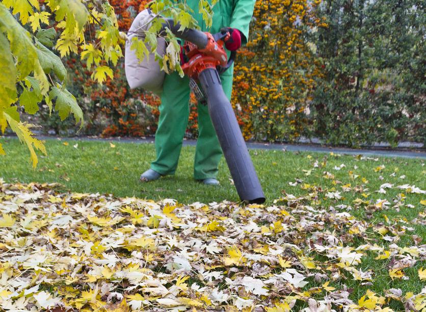 Aspirez les feuilles mortes pour en faire un fertilisant 100% naturel !