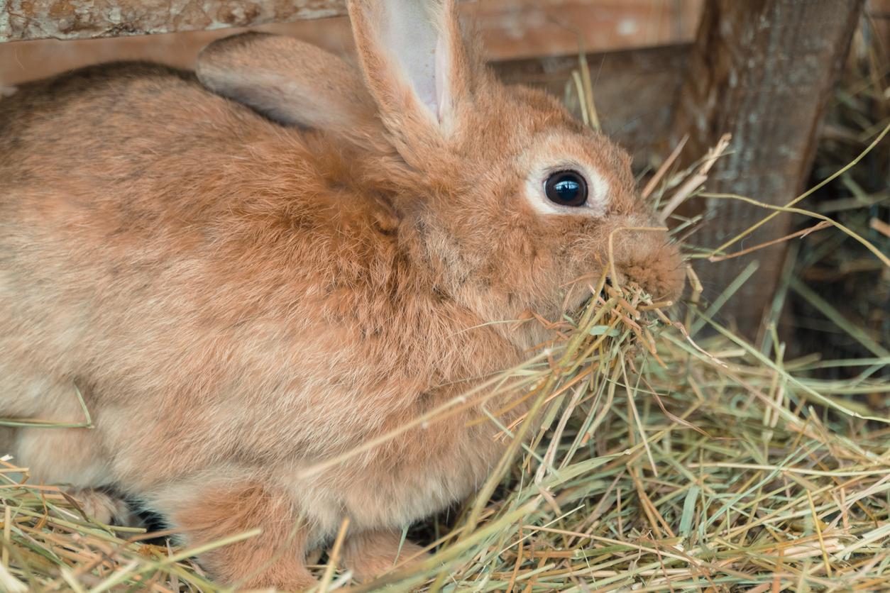 Quelle alimentation idéale pour un lapin ?