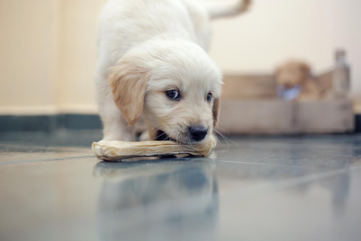 Quels soins dentaires pour un chien ?