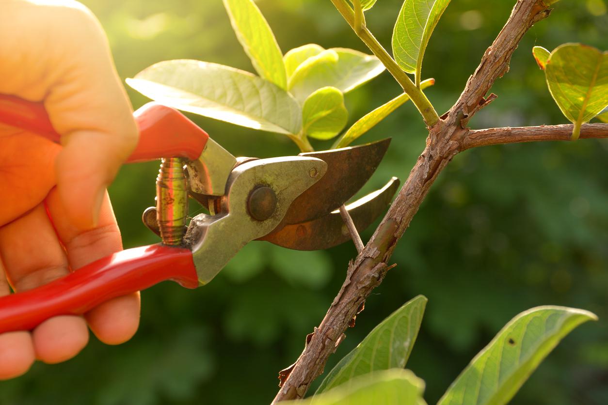 Jardiner de la main gauche grâce à des outils adaptés