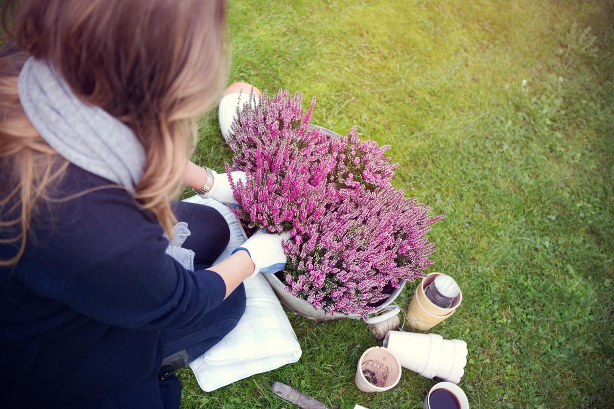 Que Mettre Avec Des Bruyeres la bruyère, une belle plante à adopter en automne