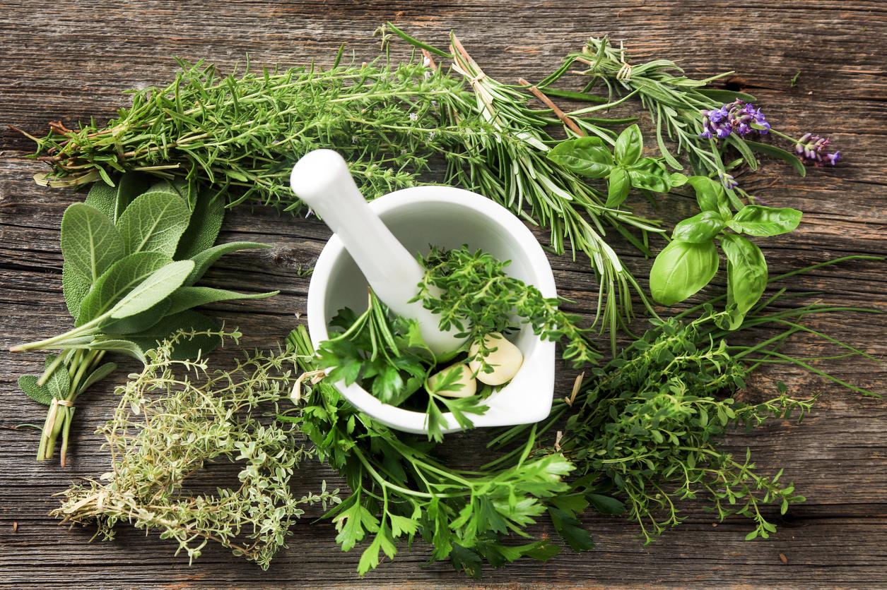 Herbes Aromatiques D Intérieur cultiver des herbes aromatiques en intérieur - bricofamily